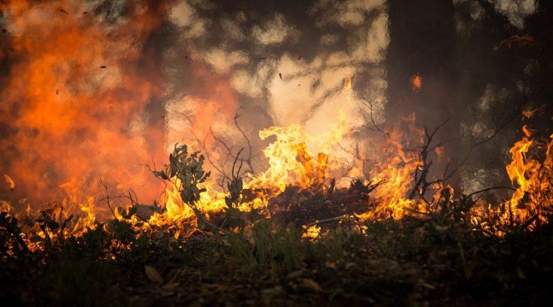 Der Brandenburger Wald hat gebrannt