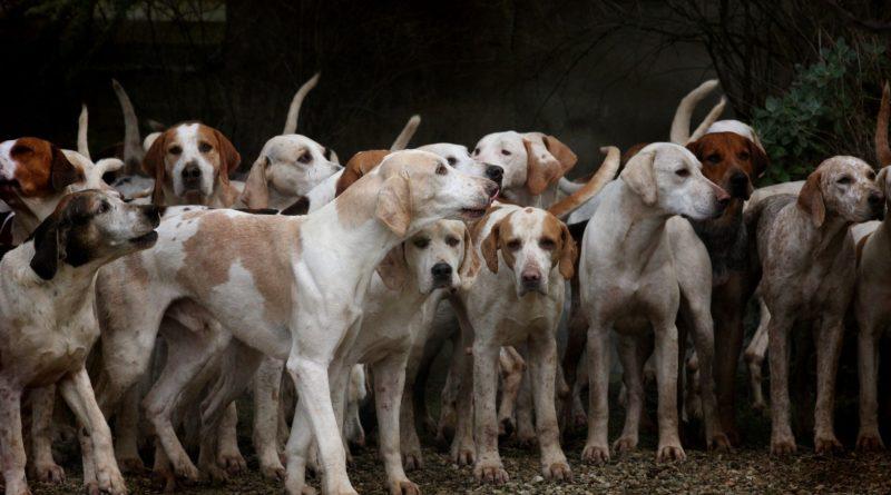 Die 10 beliebtesten Hunderassen 2020