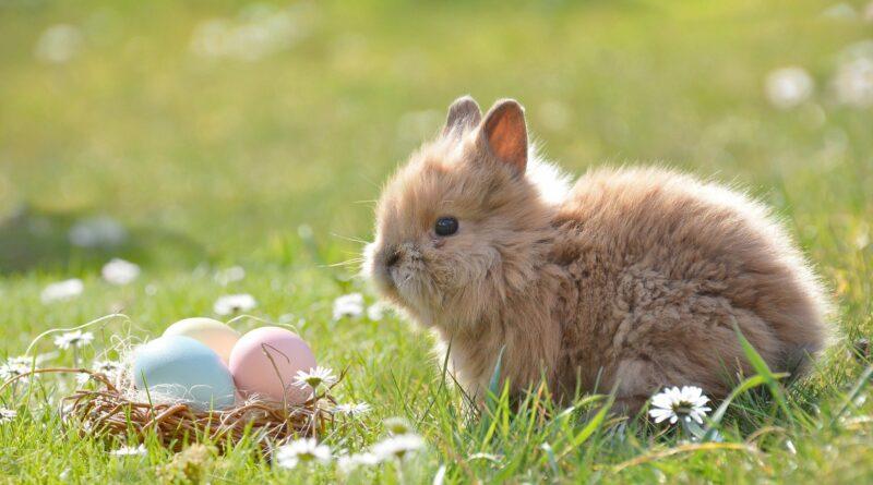 Acht coole Geschenkideen zu Ostern