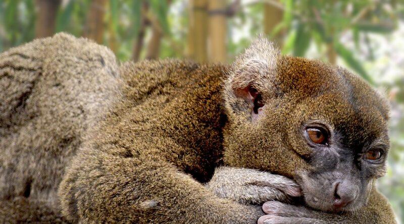 Nachwuchs im Kölner Zoo